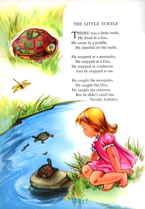 little turtle lindsey childcraft
