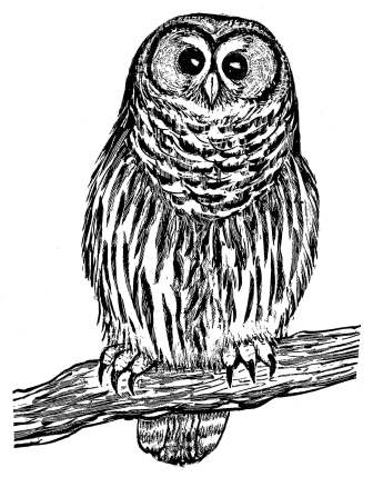 a barred owl poem analysis