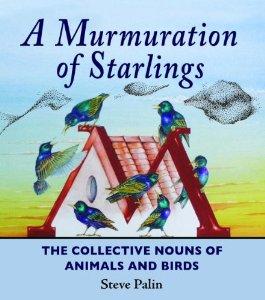 murmuration of starlings steve palin