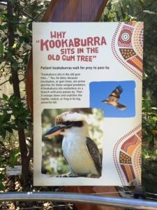 KOOKABURRA eucalyptus tree