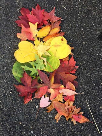 2016-10-21-escapade-of-autumn-leaves-copy