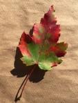 2016-10-28-leaves-5-copy
