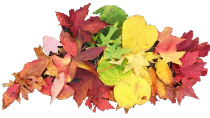 2016 10 21 escapade of autumn leaves - Copy