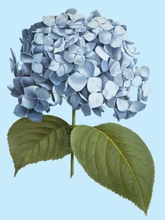 song sung blue flower - Copy